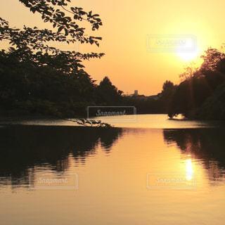 自然,夕日,太陽,緑,水面,池,オレンジ,草木
