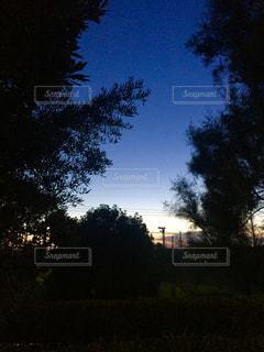 空,夕日,景色,夕暮れ時,草木