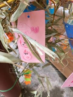 表の青い傘をトッピングの写真・画像素材[1287355]