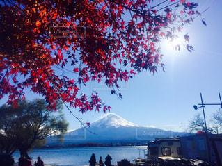 秋,富士山,紅葉,湖,青空,秋空,山中湖