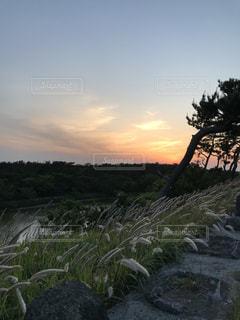 空,夕日,夕陽,ススキと夕日