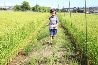 田んぼ道で楽しむ息子😊🍀の写真・画像素材[1403478]