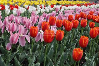 花のクローズアップの写真・画像素材[4296011]