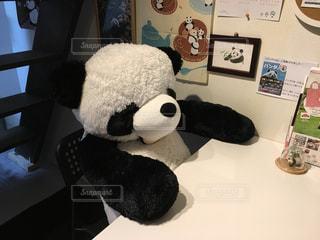 勉強中?のパンダの写真・画像素材[1296158]