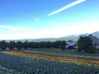 自然,空,花,景色,ラベンダー,フィルム,フィルム写真,フィルムフォト