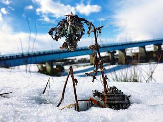 冬の枯れ草の写真・画像素材[1312890]