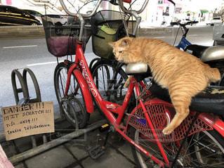 自転車に座っている猫の写真・画像素材[1281384]