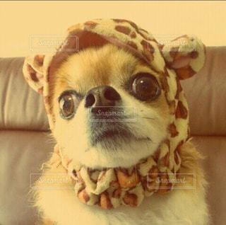 犬の写真・画像素材[12907]