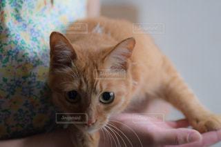 猫ちゃん。の写真・画像素材[1278531]