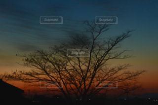 自然,空,夕日,屋外,太陽,綺麗,夕焼け,影,光,キラキラ,夕陽,グラデーション