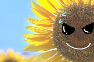 空,夏,屋外,ひまわり,サングラス,かわいい,雲,きれい,暑い,黄色,水色,鮮やか,光,夏休み,ひまわり畑,福岡,summer,猛暑,北九州,柳川,汗,日中,複数,熱中症,柳川ひまわり園,色・表現