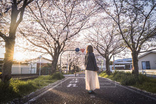 花,春,桜,屋外,散歩,桜並木,女の子,可愛い,並木道,歩道,レジャー,野外,お散歩,ライフスタイル,おでかけ