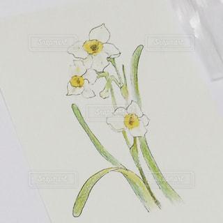 水仙の花を習ったの写真・画像素材[1326240]