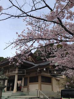 幸運の鈴 光雲神社は桜の名所西公園にの写真・画像素材[1442275]