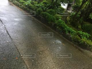 道路の脇に木がある道の写真・画像素材[2210804]