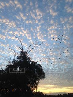 雲,夕暮れ,田舎,大自然,オーストラリア