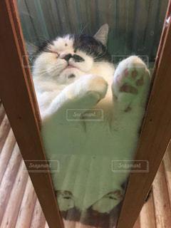 たれ猫の写真・画像素材[1284748]