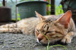 眠り猫の写真・画像素材[1285881]
