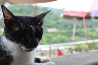 眠り猫の写真・画像素材[1285885]