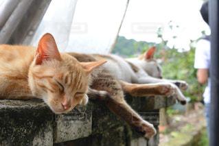 車の窓の上で眠っている猫の写真・画像素材[1285886]