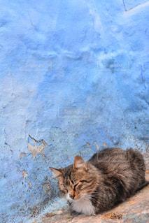 地面に横になっている猫の写真・画像素材[1290913]