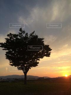 空,夕日,木,芝生,太陽,夕焼け,夕暮れ,夕方