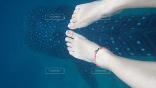 ジンベイザメと一緒にの写真・画像素材[1314037]
