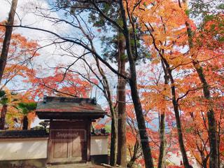 大窪寺にての写真・画像素材[1634599]