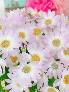 ピンク色フォト♪の写真・画像素材[1800994]