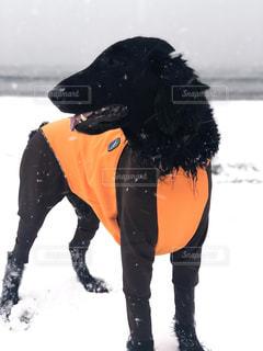 犬,海,雪,雪の海,雪の中の犬