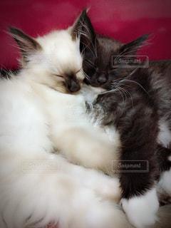 ベッドの上で横になっている猫の写真・画像素材[1283386]