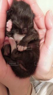 子猫の写真・画像素材[1283467]