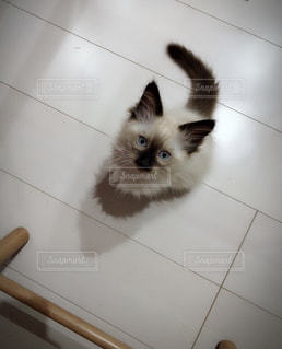 白い壁の上に座っている猫の写真・画像素材[1283767]