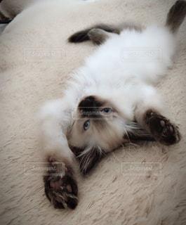 ベッドの上で横になっている猫の写真・画像素材[1284130]