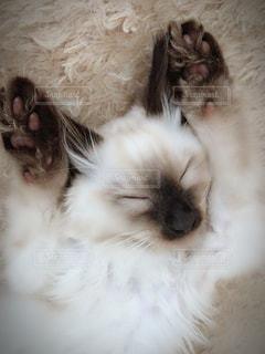 近くに眠っている猫のアップの写真・画像素材[1284131]