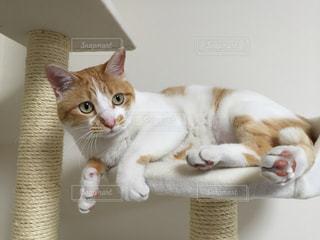 愛猫の写真・画像素材[1283824]