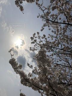 春,桜,花見,お花見