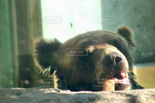 夏,熊,夏バテ,熱中症,クマ