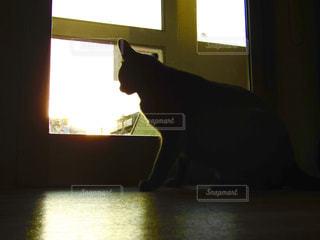 夕方,シルエット,夕陽,佇む,ネコ,照らされる