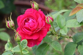 近くの花のアップの写真・画像素材[1371284]