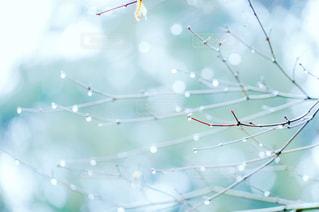 木,雨,水,水滴,水玉,雫,しずく