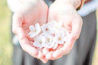 花を持つ手の写真・画像素材[2809123]
