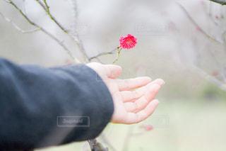 花を持つ手の写真・画像素材[2809124]