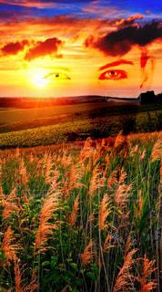 空,夕日,稲穂,瞳
