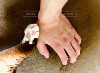 猫の手を借りたいの写真・画像素材[1285795]