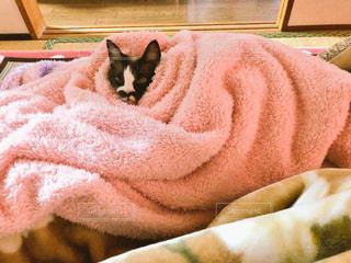 ベッドの上で横になっている猫の写真・画像素材[1285796]