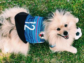 犬,動物,スポーツ,青,サッカー,運動,日本代表,応援,フットボール,W杯