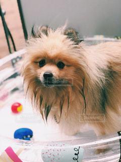 犬,夏,屋外,プール,夏バテ,熱中症,インスタ映え,熱中症対策