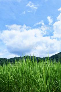 田舎の空の写真・画像素材[2442642]