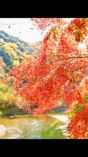 光り輝く川面と紅葉の写真・画像素材[2510716]